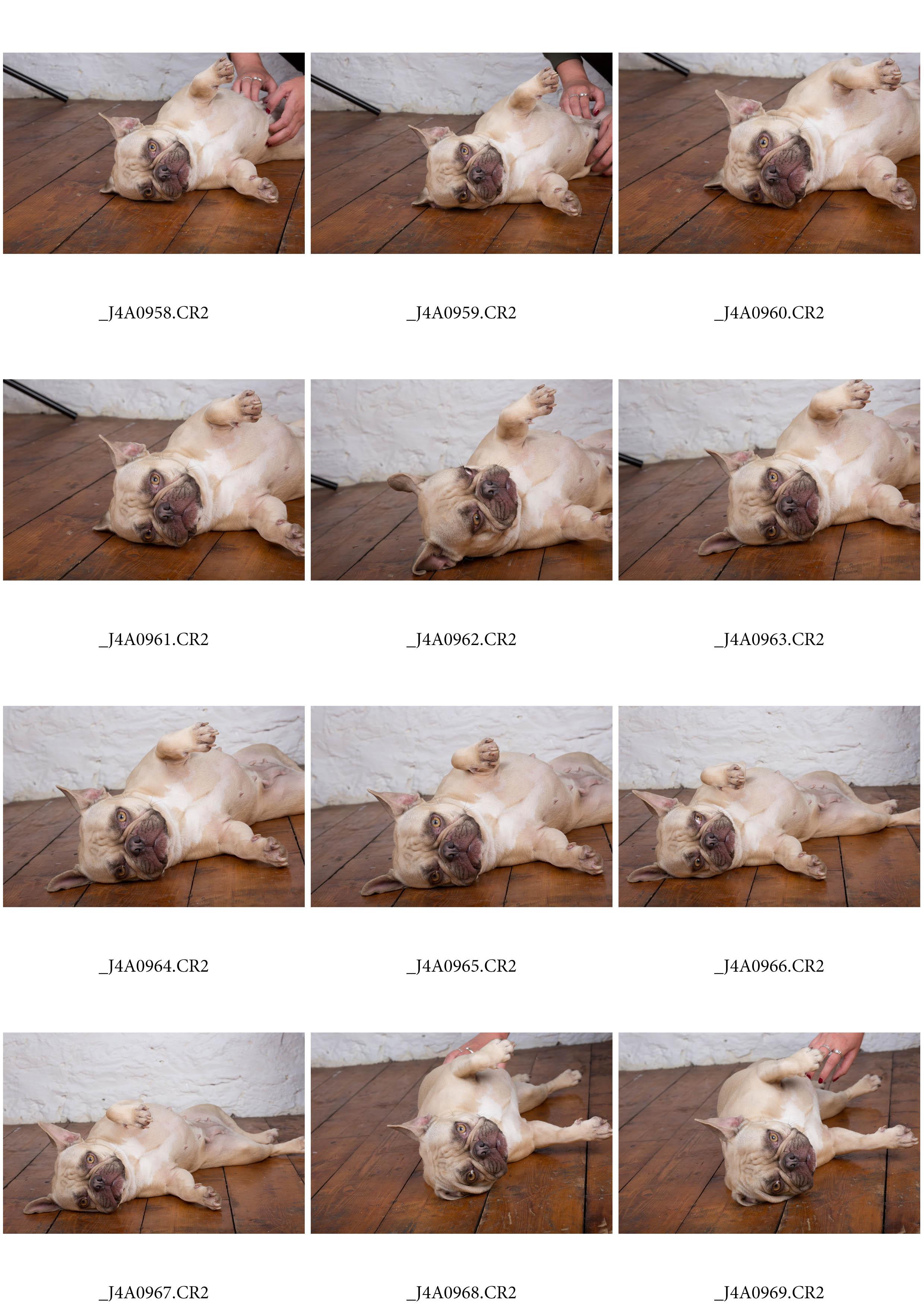 ContactSheet-009 copy.jpg
