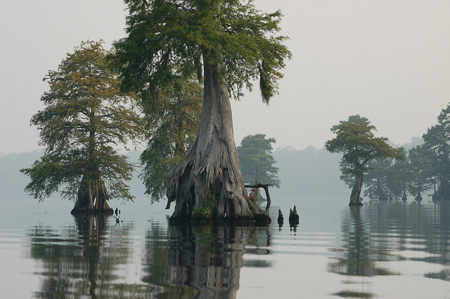 """The Great Dismal Swamp National Wildlife Refuge,"" U.S. Fish and Wildlife Service, 2011. ( USFWS via Flickr )"