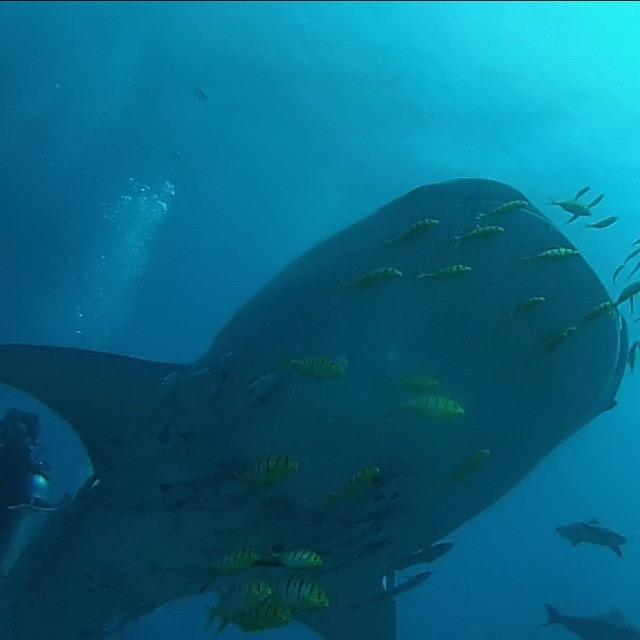 HelloElNido-whale.jpg