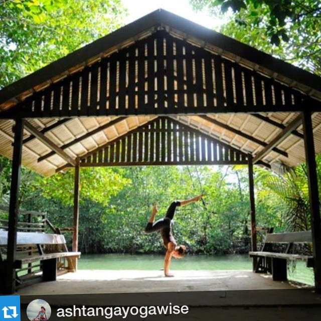 #Repost @ashtangayogawise with @repostapp.