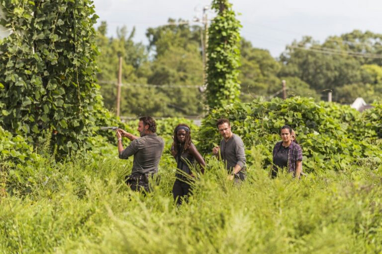 Rick, Michonne, Aaron and Tara scope out a field