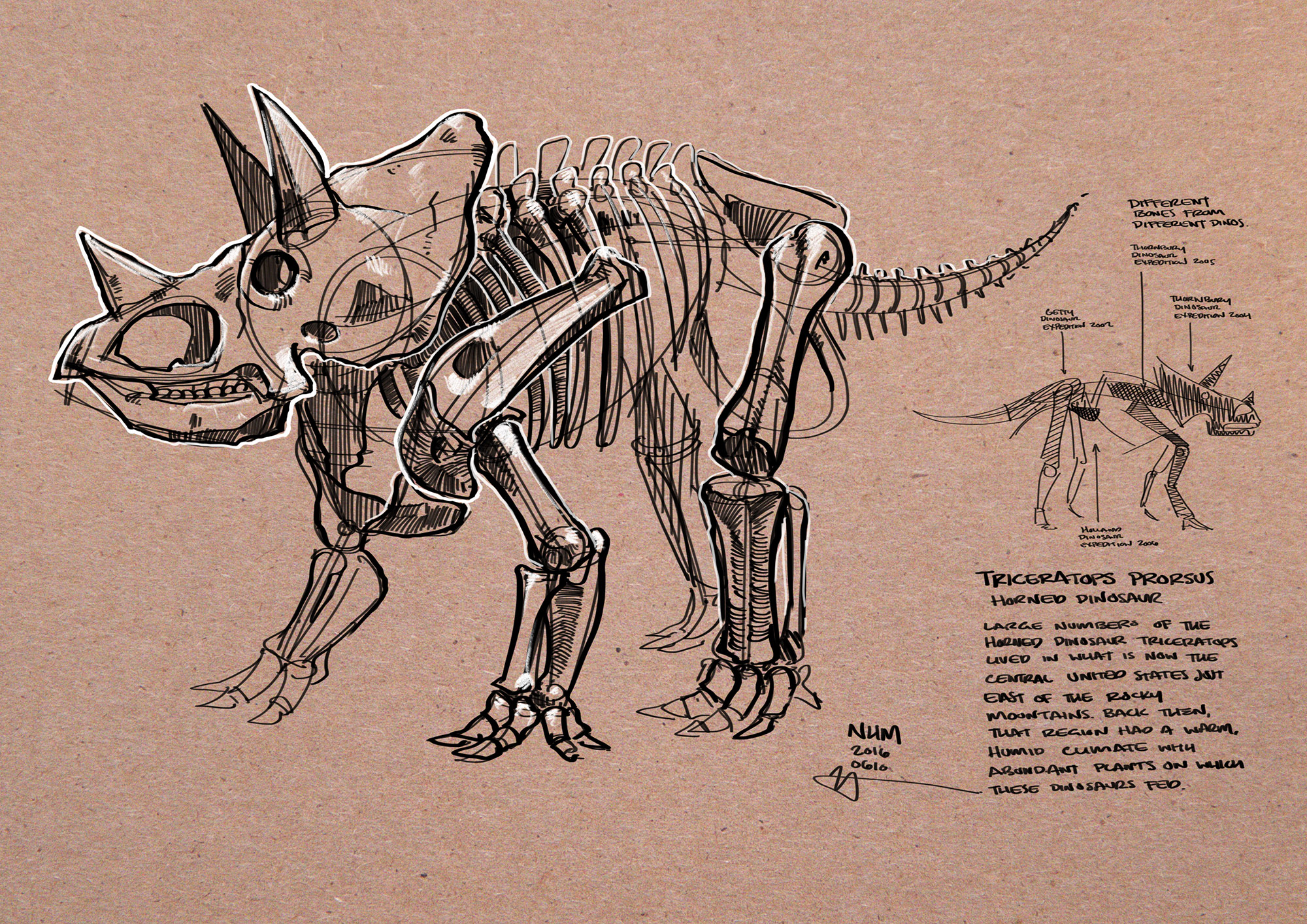 NHM_-_Triceratops.jpg