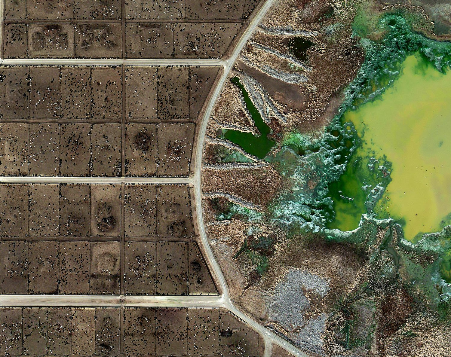 "In this aerial view, the little potatoes are the dots on the left and their waste is pictured in the ""lagoon"" on the right."