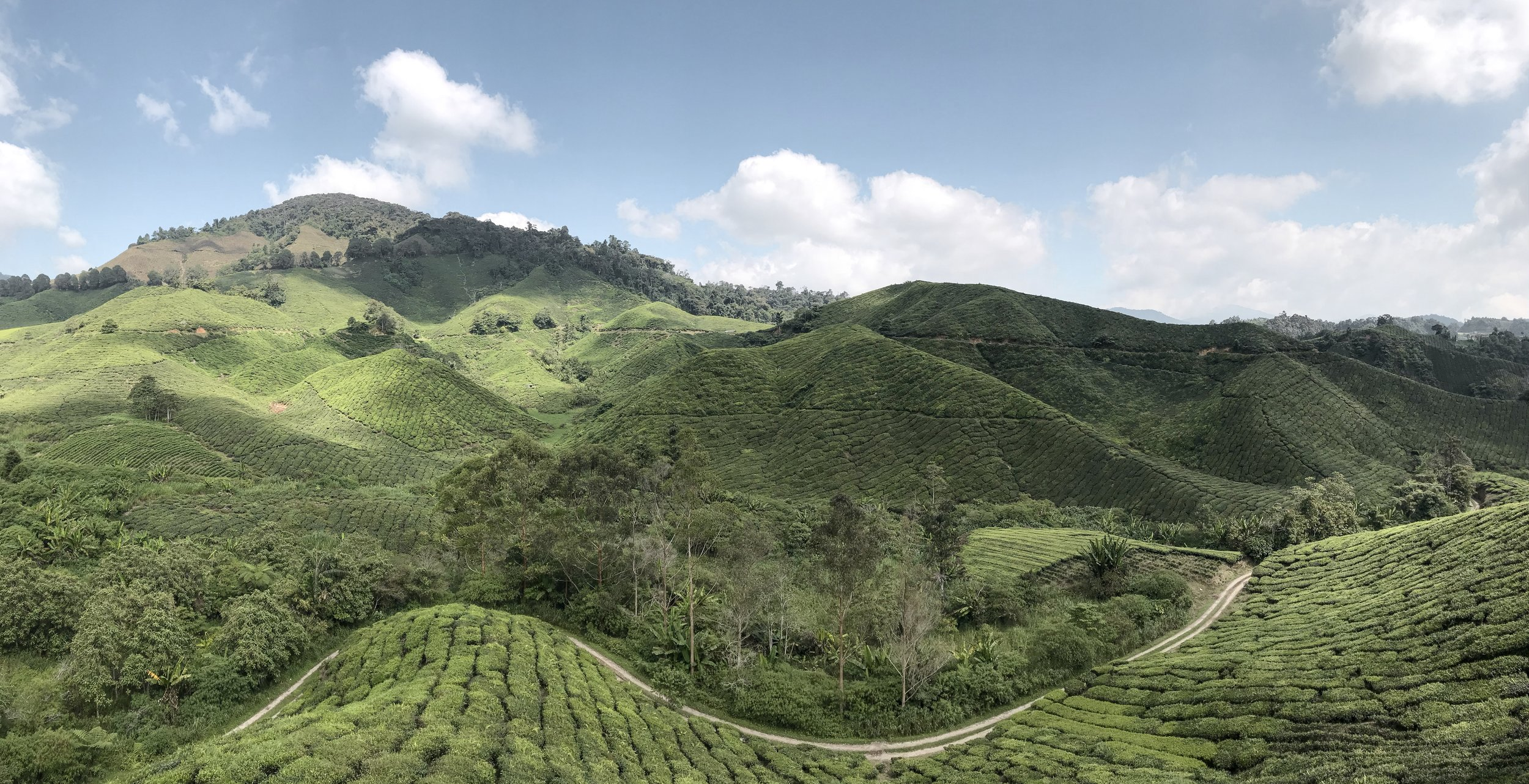 A panoramic shot of the hills at the BOH Tea Farm.
