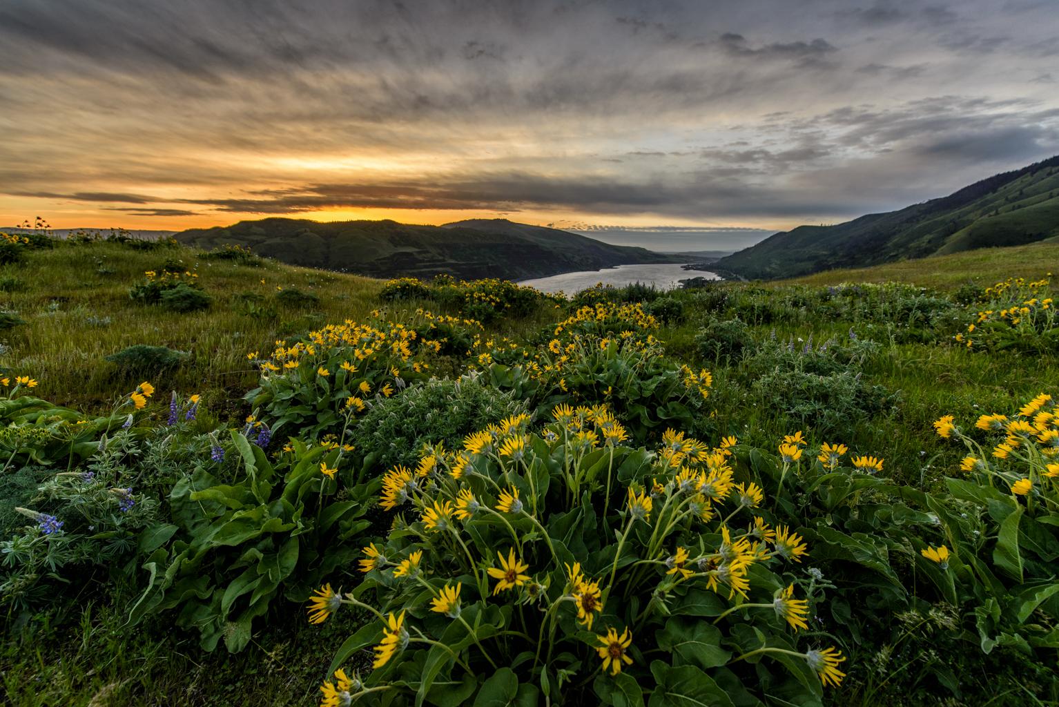 Rowena's Wildflowers