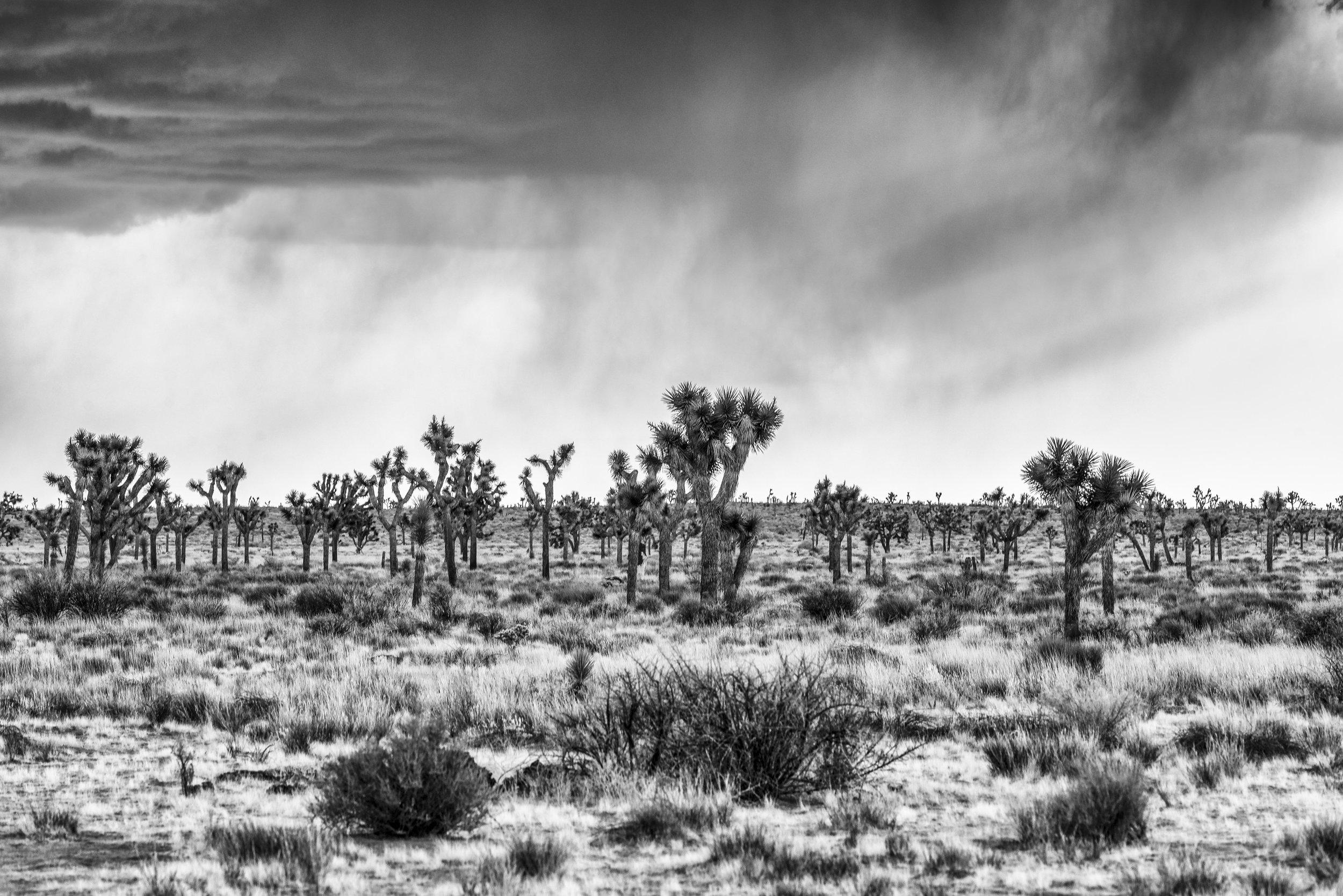 Joshua Tree Storms