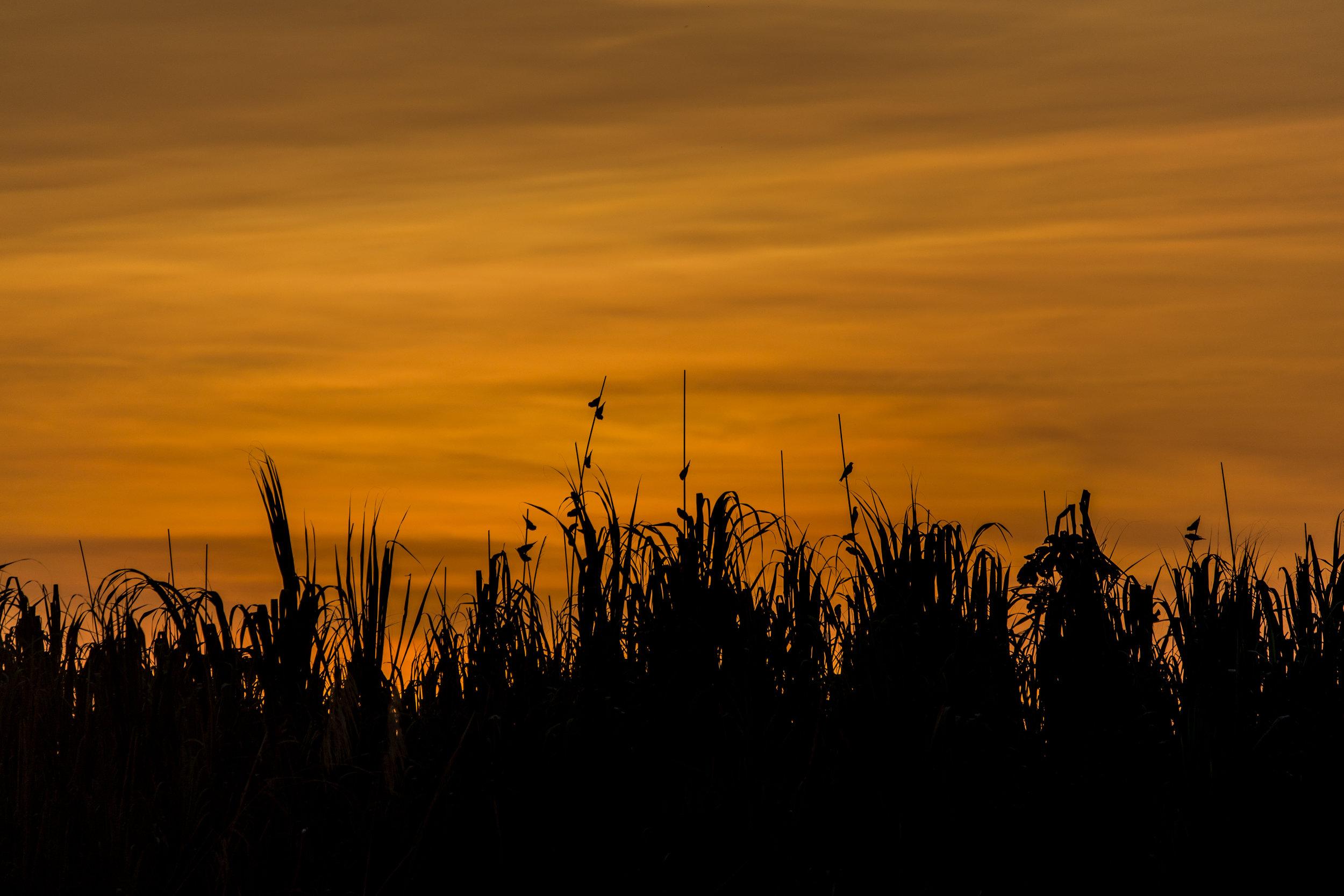 Amazon Sunrise