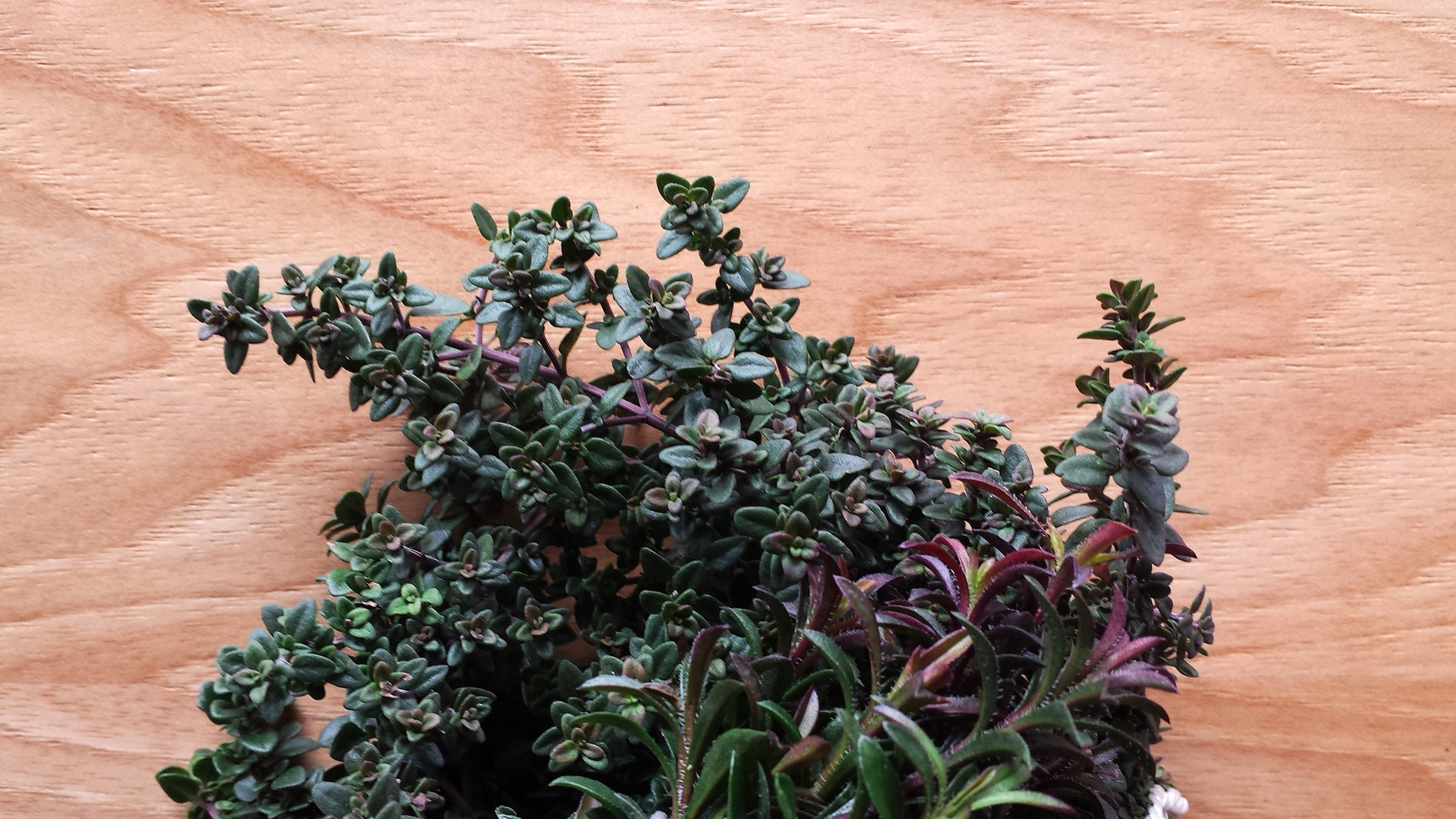 Thanks for taking the thyme (here we go...) to read this long winded first post!
