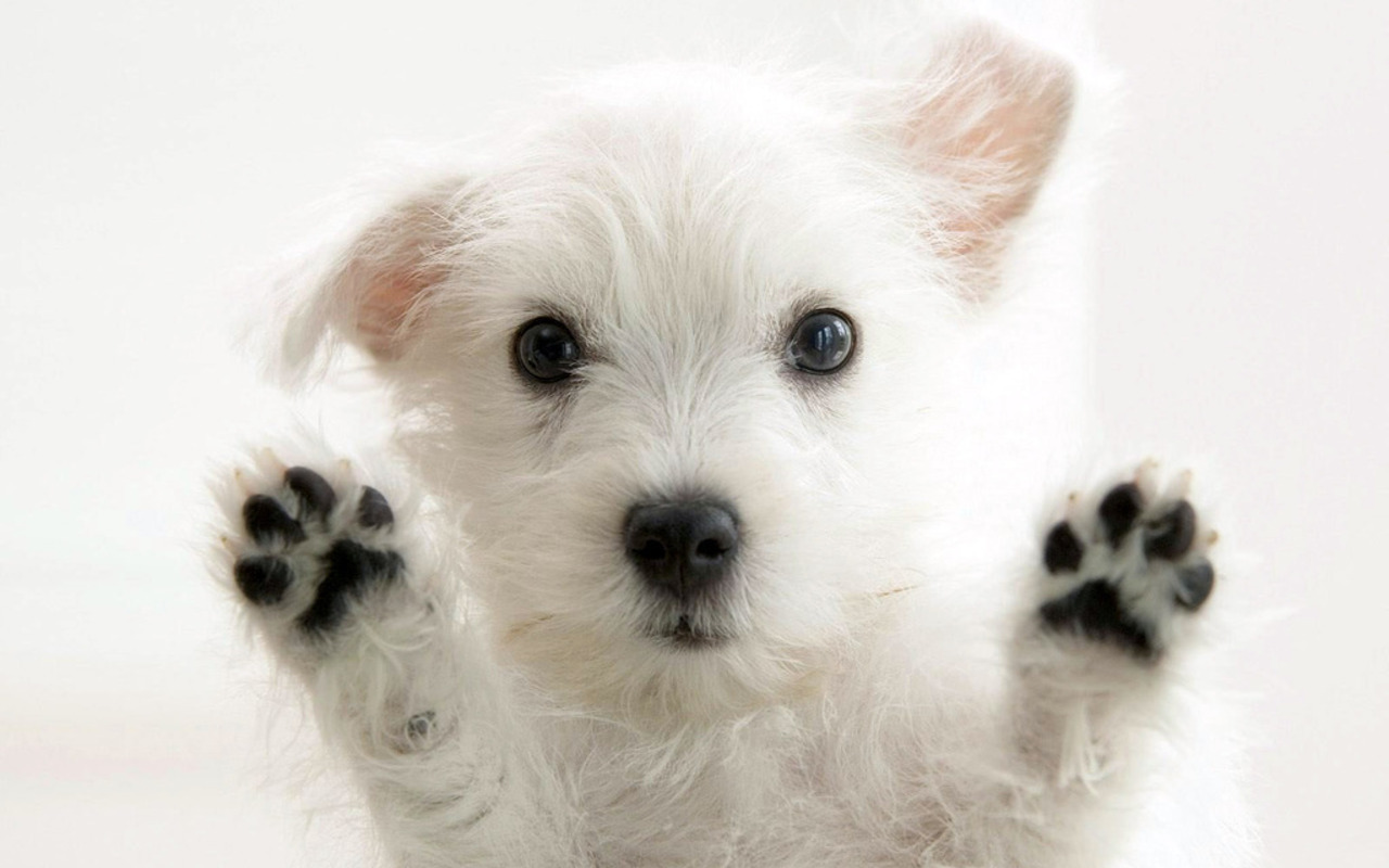Puppy And Kitten Packages San Jose Animal Hospital