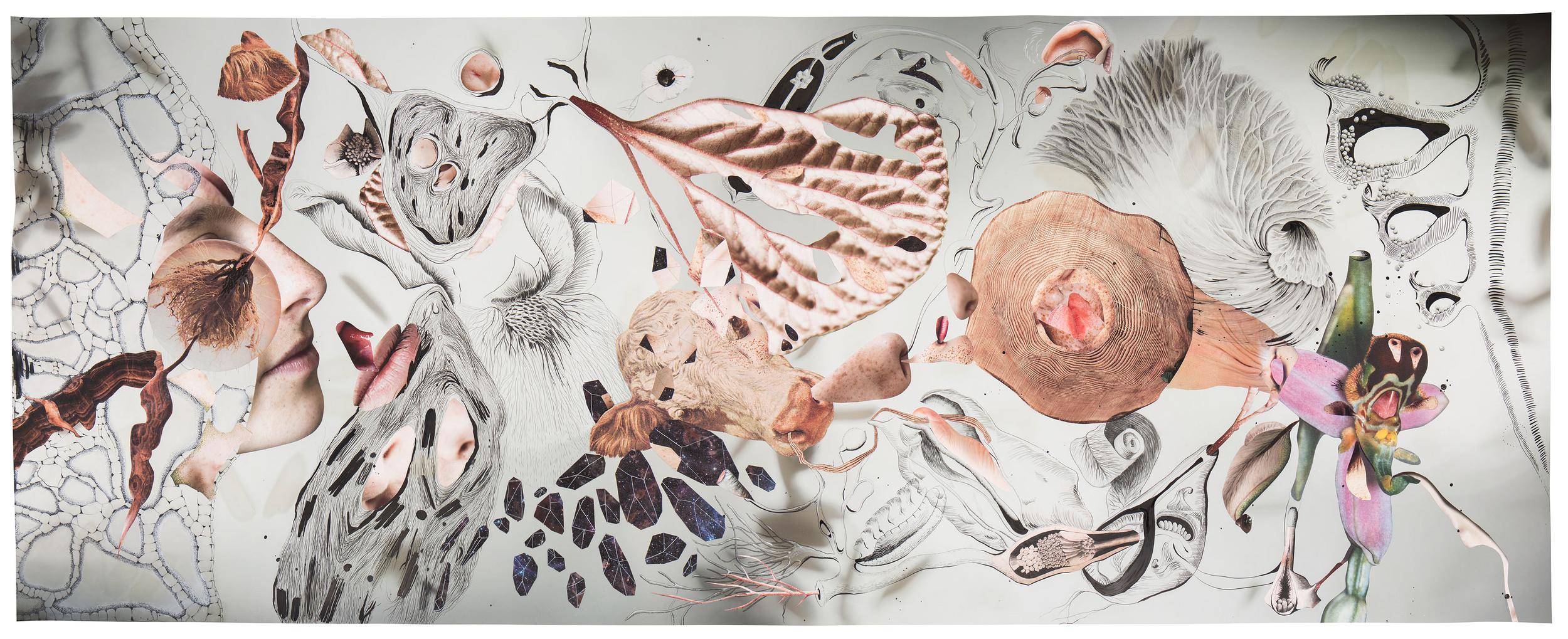 Pseudoxia Epidemica   Collage, grafito y tinta sobre impresión giclée 1.5 x 3.8 mt
