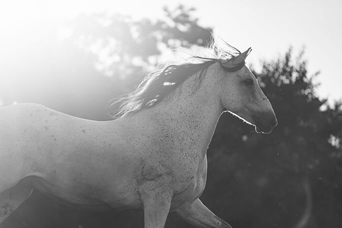 alyssa-smolen-photography-minnesota-colorado-wedding-equine-horse-photographer.jpg