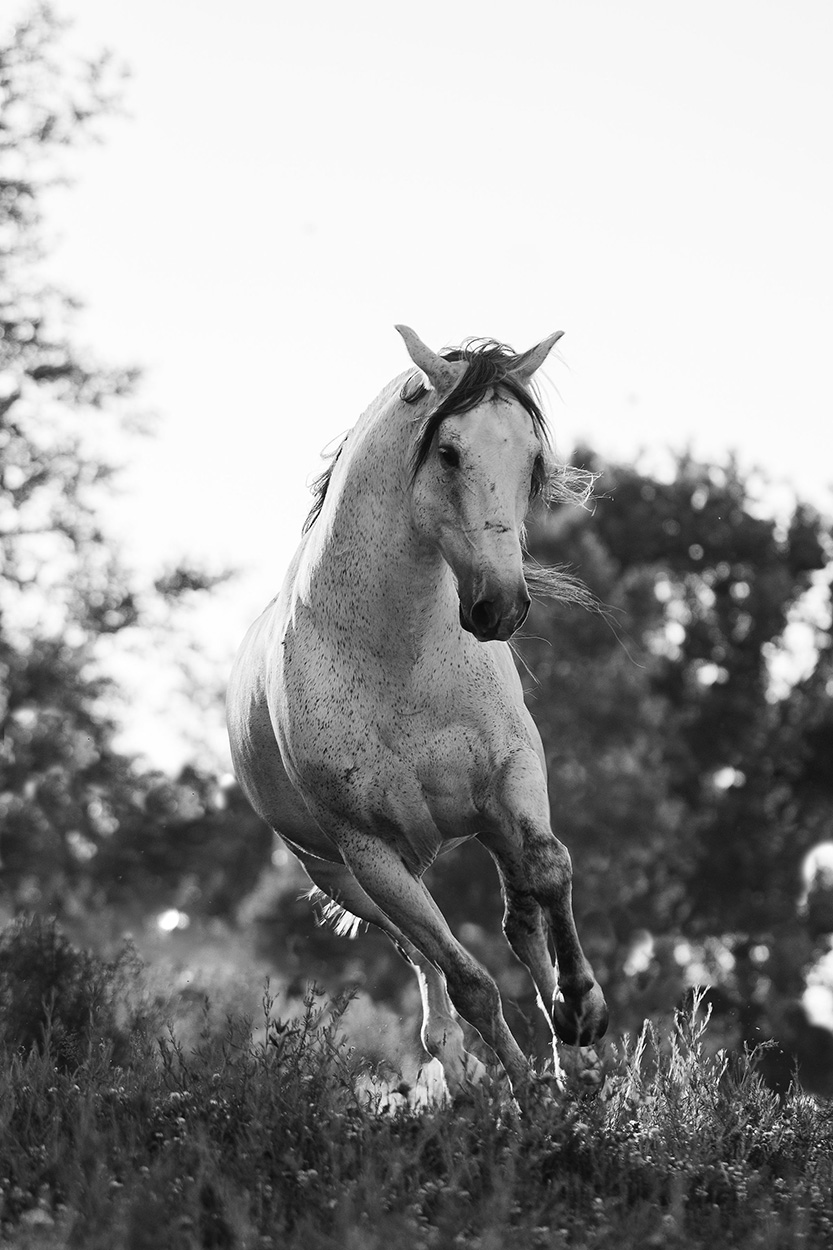 alyssa-smolen-photography-minnesota-colorado-wedding-equine-horse-photographer-fineart.jpg