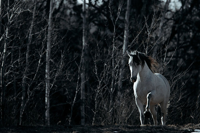 minnesota-horse-equine-photographer-alyssa-smolen-photography24.jpg
