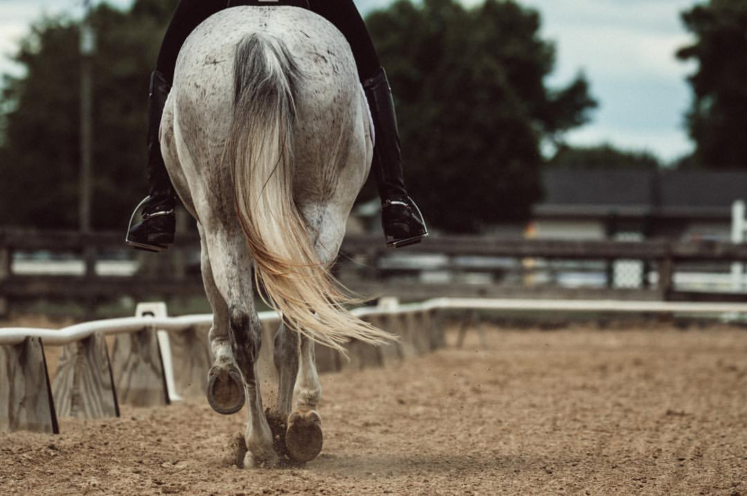 minnesota-horse-equine-photographer-alyssa-smolen-photography-dressage.jpg