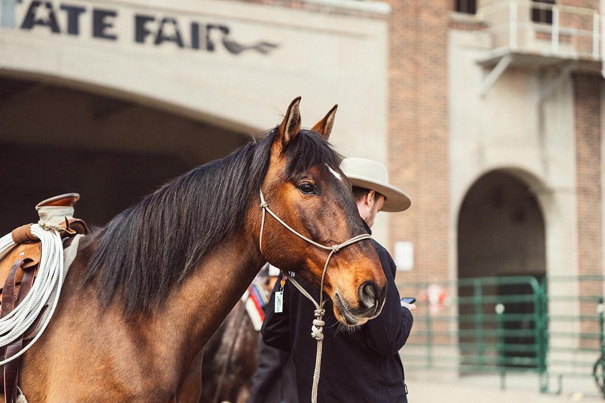 bellweather farm minnesota horse expo alyssa smolen photography.jpg