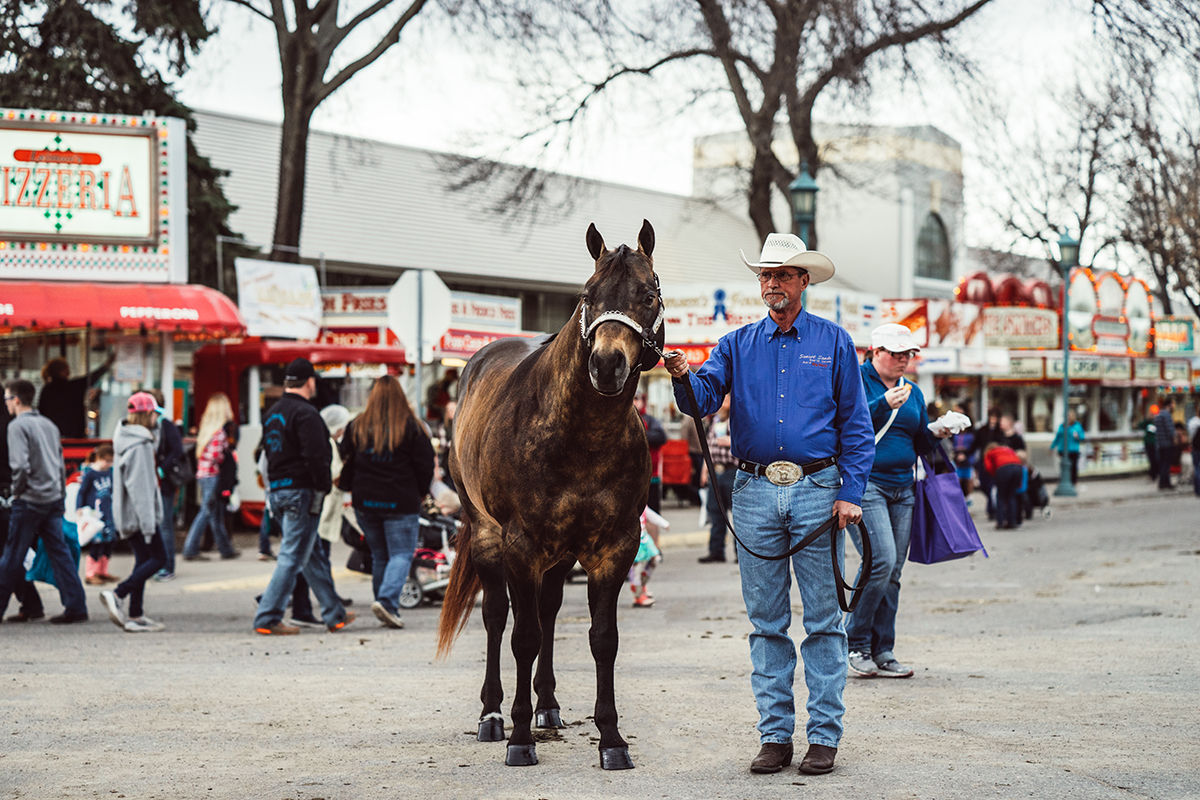 dapple quarter horse minnesota horse expo alyssa smolen photography.jpg