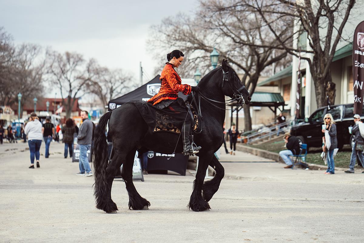 imperial friesians minnesota horse expo alyssa smolen photography.jpg