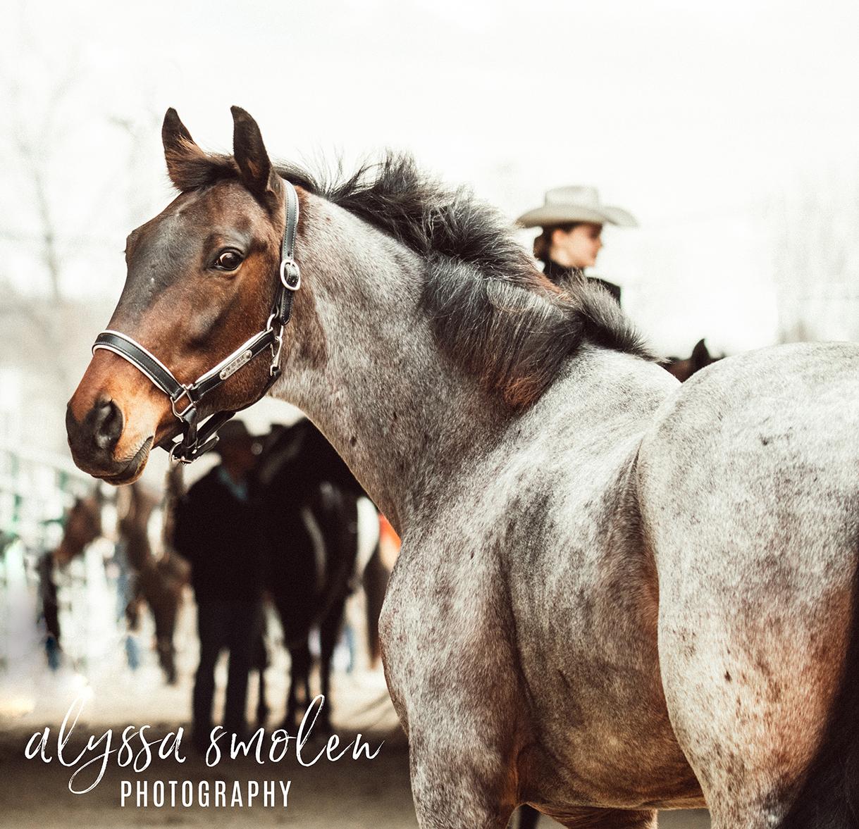 im so blue minnesota horse expo blue roan.jpg