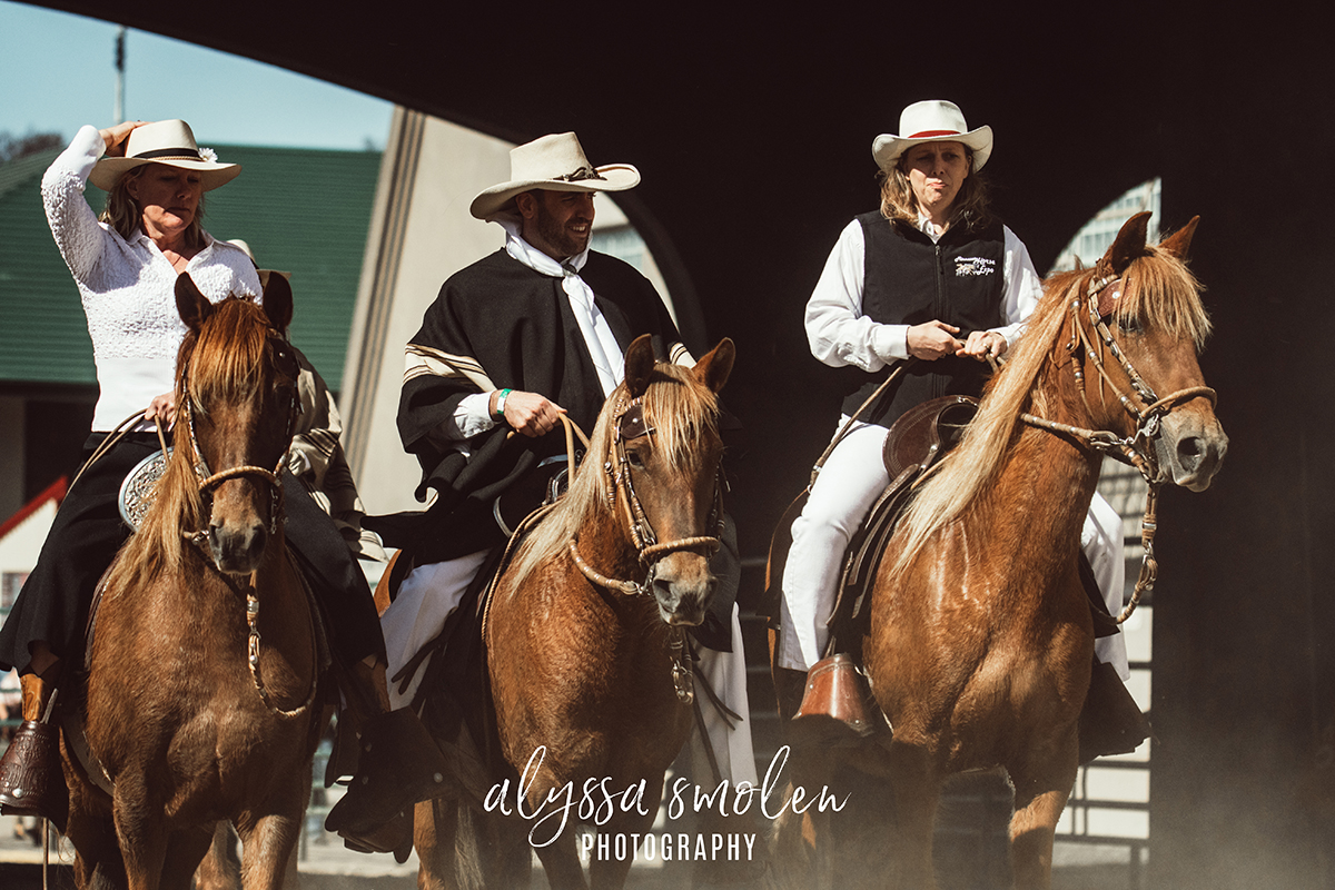 minnesota horse expo peruvian paso.jpg