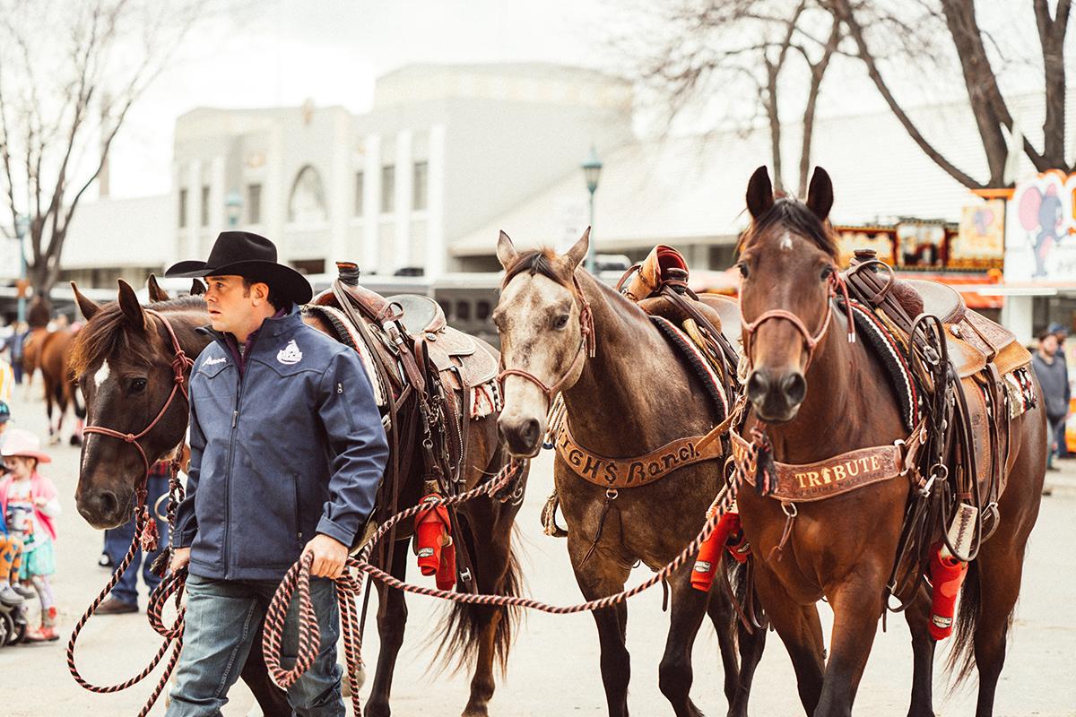 minnesota horse expo prca rodeo alyssa smolen photography.jpg