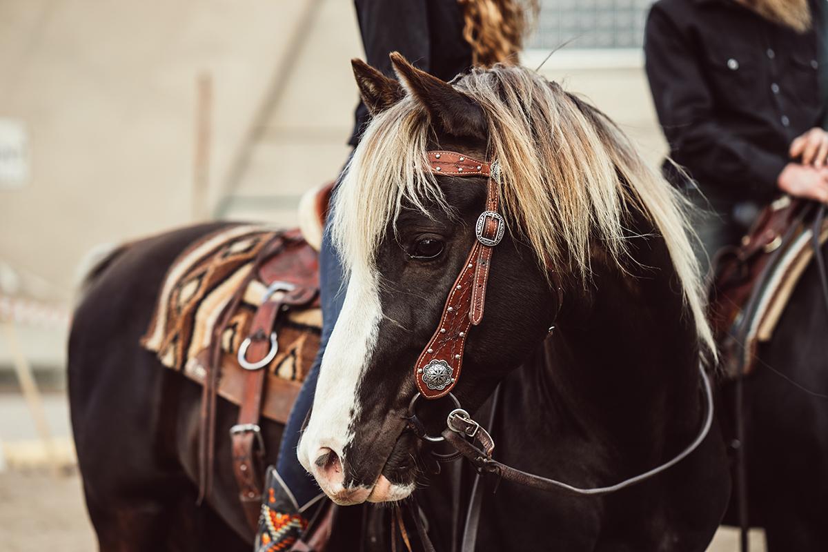 rsquared ranch minnesota horse expo rocky mountain horse alyssa smolen photography.jpg