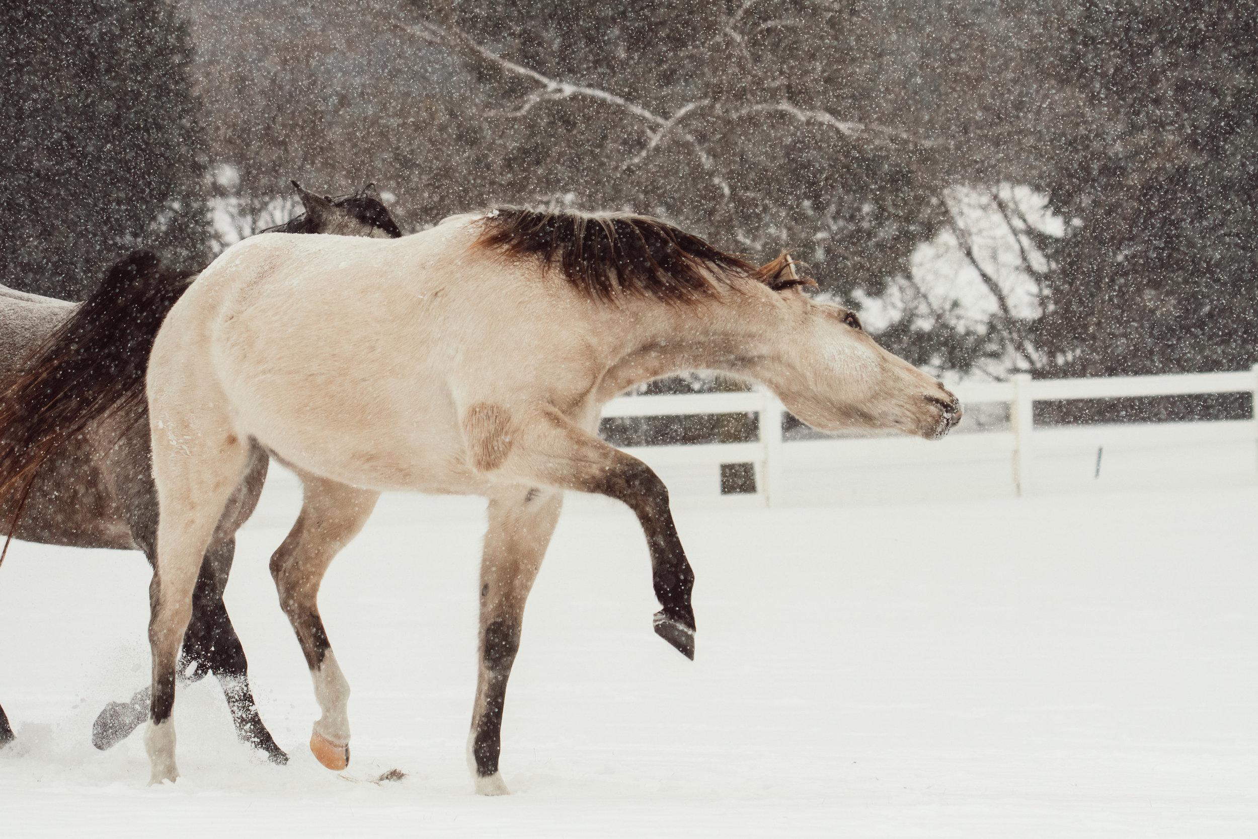 WinterLauren-130.jpg