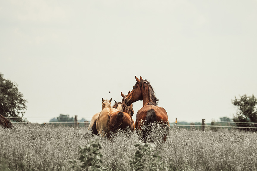 this-old-horse-minnesota-alyssa-smolen-photography-12.jpg
