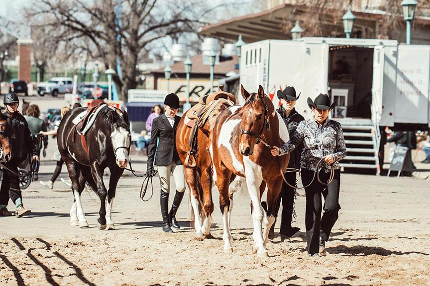 Minnesota-Horse-Expo-Alyssa-Smolen-Photography-1.jpg