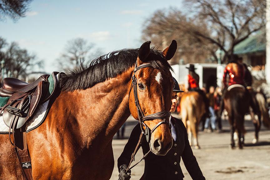 Minnesota-Horse-Expo-Alyssa-Smolen-Photography-2.jpg