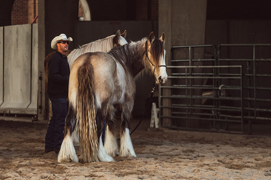 Minnesota-Horse-Expo-Alyssa-Smolen-Photography-Big-Shoe-Ranch-Drum-Horse-Cimarron-Ranch.jpg