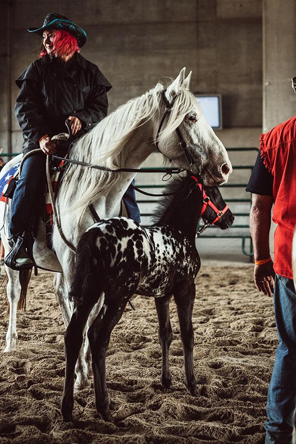 Minnesota-Horse-Expo-Alyssa-Smolen-Photography-Dreammaker-Appaloosas.jpg