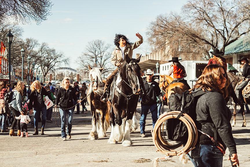 Minnesota-Horse-Expo-Alyssa-Smolen-Photography-Gypsy-Vanner.jpg