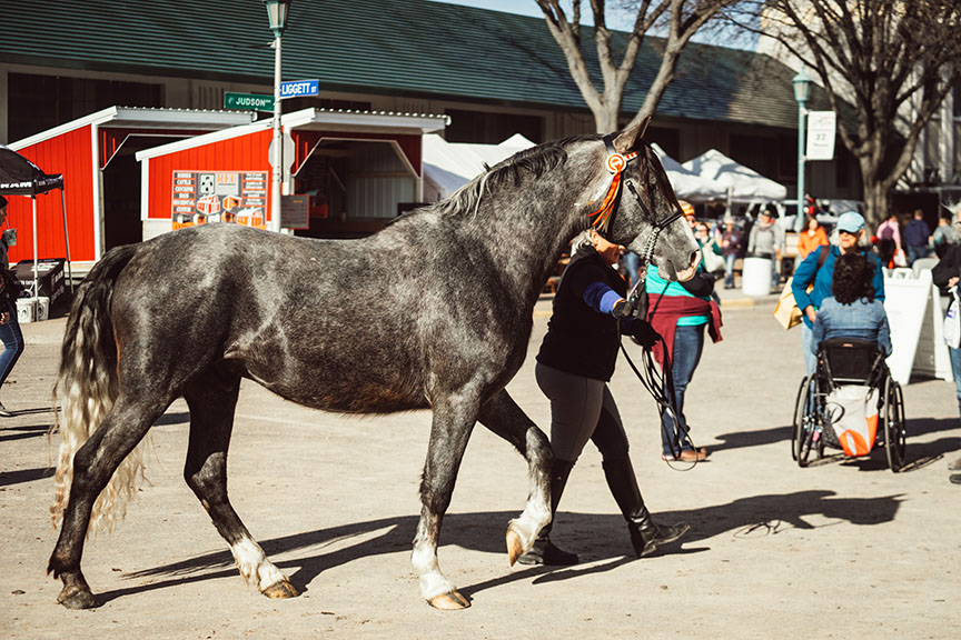 Minnesota-Horse-Expo-Alyssa-Smolen-Photography-P4-Spanish-Horses-Andalusian.jpg
