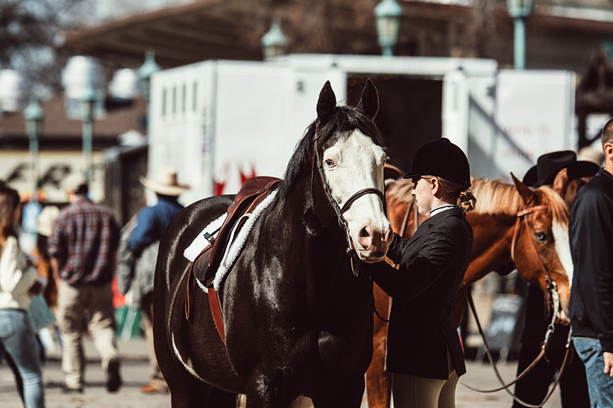 Minnesota-Horse-Expo-English-Rider-Alyssa-Smolen-Photography.jpg