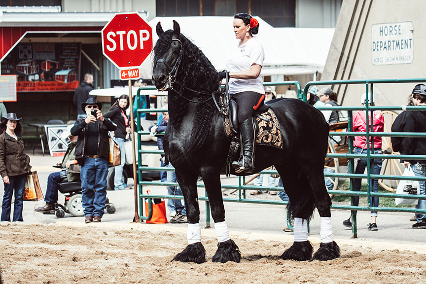 Minnesota-Horse-Expo-Friesian-Stallion-Alyssa-Smolen-Photography.jpg