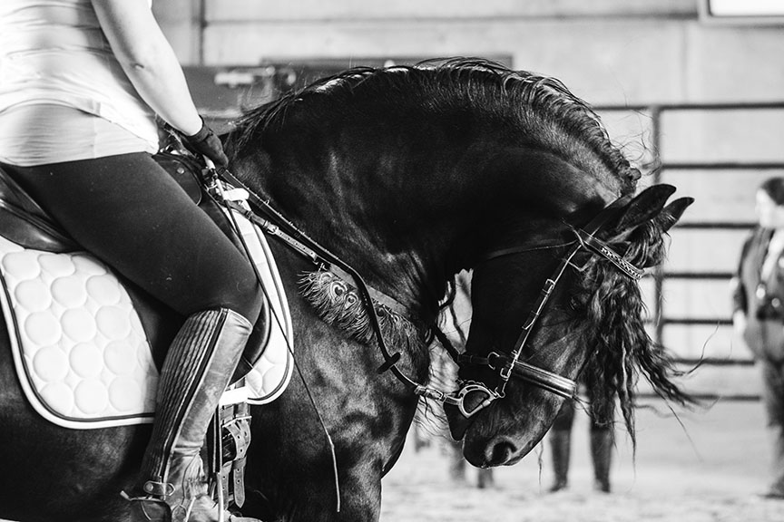 Minnesota-Horse-Expo-Klaas-Friesian-Stallion-Alyssa-Smolen-Photography-1.jpg