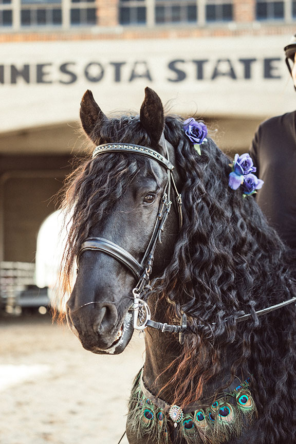 Minnesota-Horse-Expo-Klaas-Friesian-Stallion-Alyssa-Smolen-Photography-3.jpg