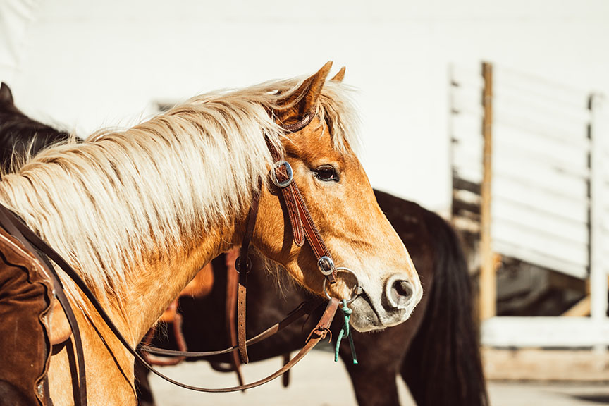Minnesota-Horse-Expo-R-Squared-Ranch-Alyssa-Smolen-Photography-1.jpg
