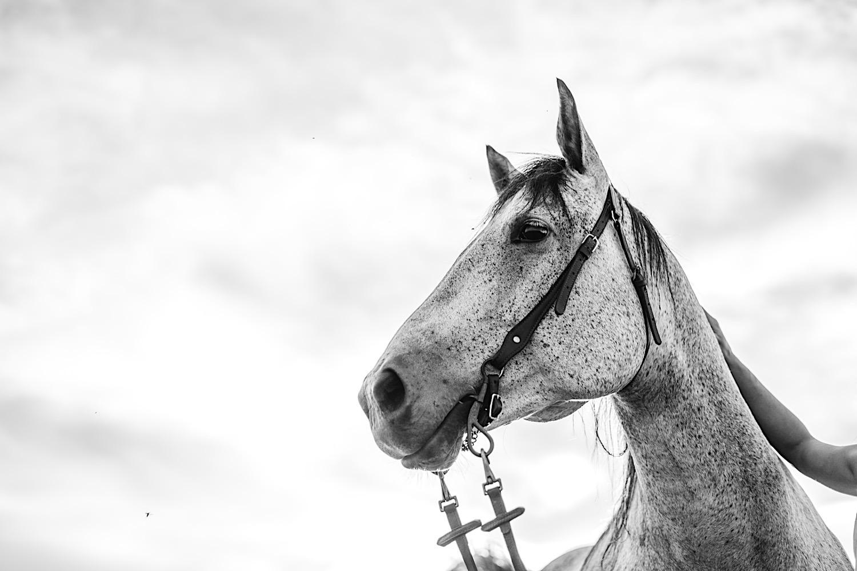 06_horsecouch-164.jpg