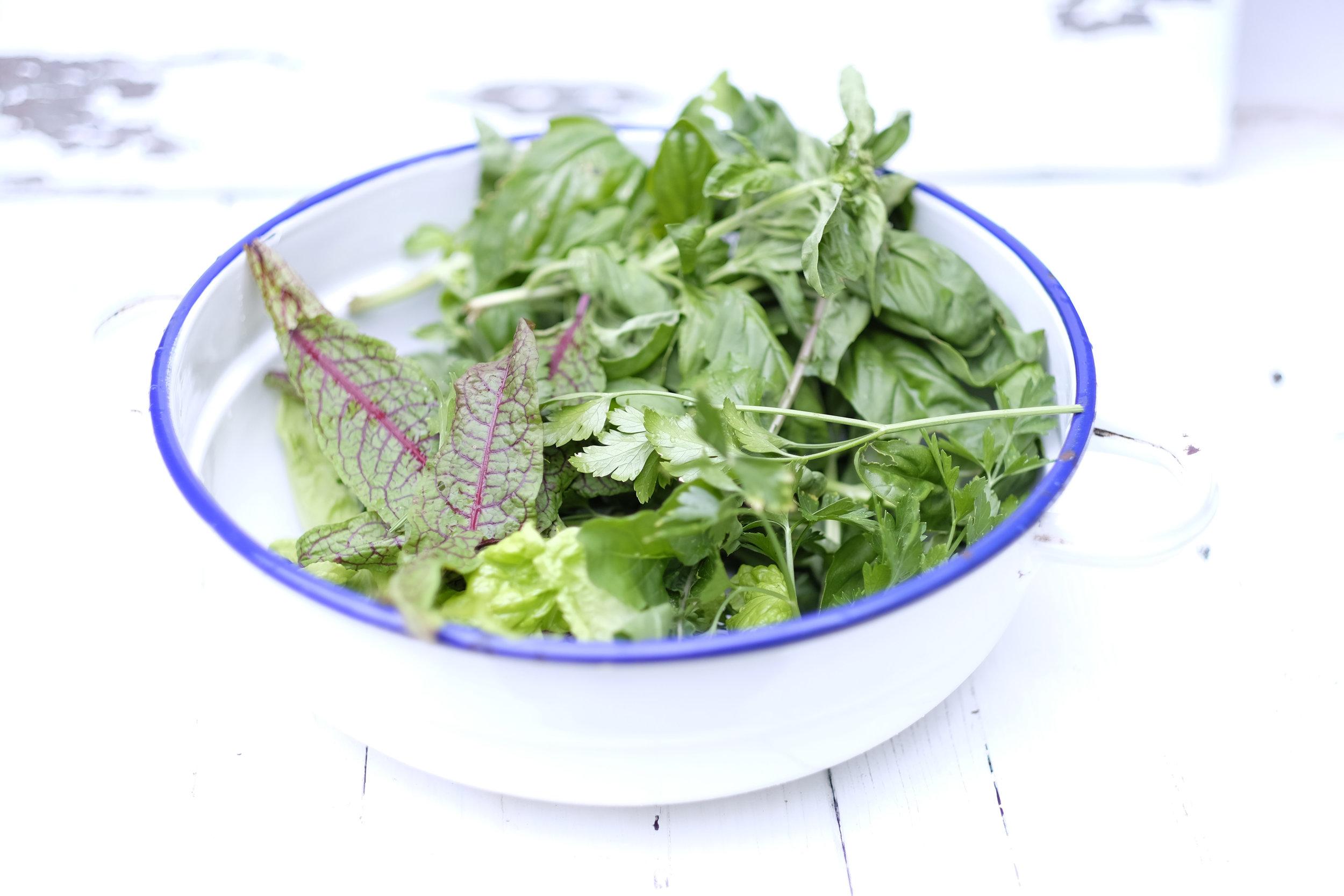 Home grown salad ingredients