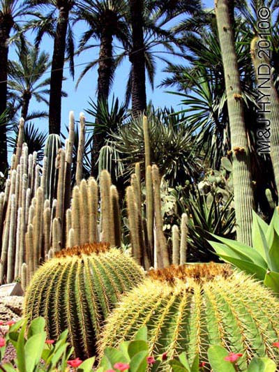 spain elche palmeral Huerto del Cura Priest Garden different types of palm trees, cacti, succulents
