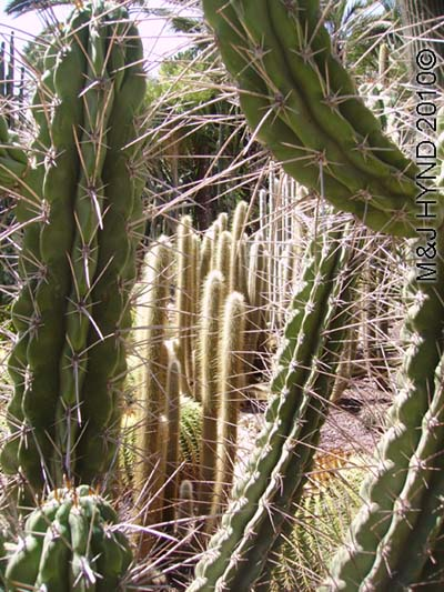 spain elche palmeral Huerto del Cura Priest Garden different types of thorny cacti, succulents