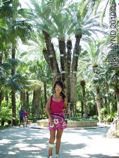 spain elche palmeral Huerto del Cura Priest Garden Imperial Palm, 7 boughs, stems, branches, candelabra, different types of palm trees