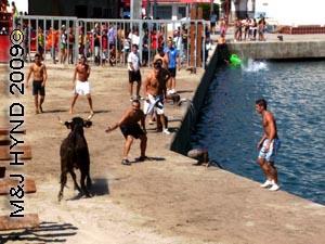 bull+idiots #1: spain Javea Fiesta, Bous a la Mar, bullring Javea port, boys taunt bull