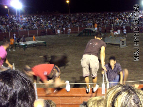 bullring: Spain Santa Pola Annual Fiesta, gymkhana bullring bulls chasing young men