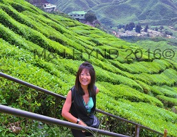 Cameron Highlands Malaysia Bharat Tea Plantation, tea farm, camellia sinensis unique flavour aroma colour, black oolong, green, undulating slopes, tea-picker village