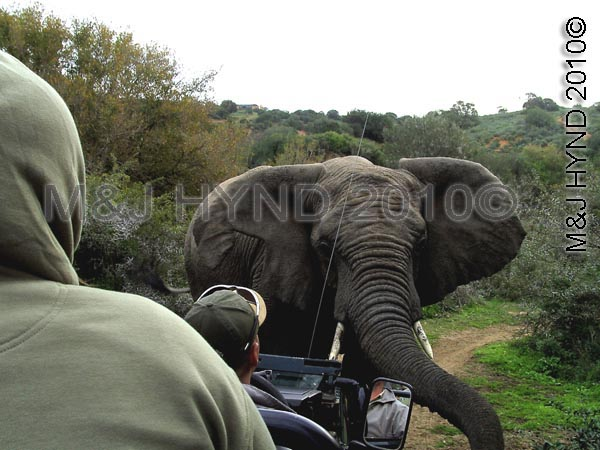 Up front!, Shamwari Game Reserve, SA