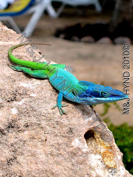 Colourful native, poolside: Paradisus Varadero, Cuba