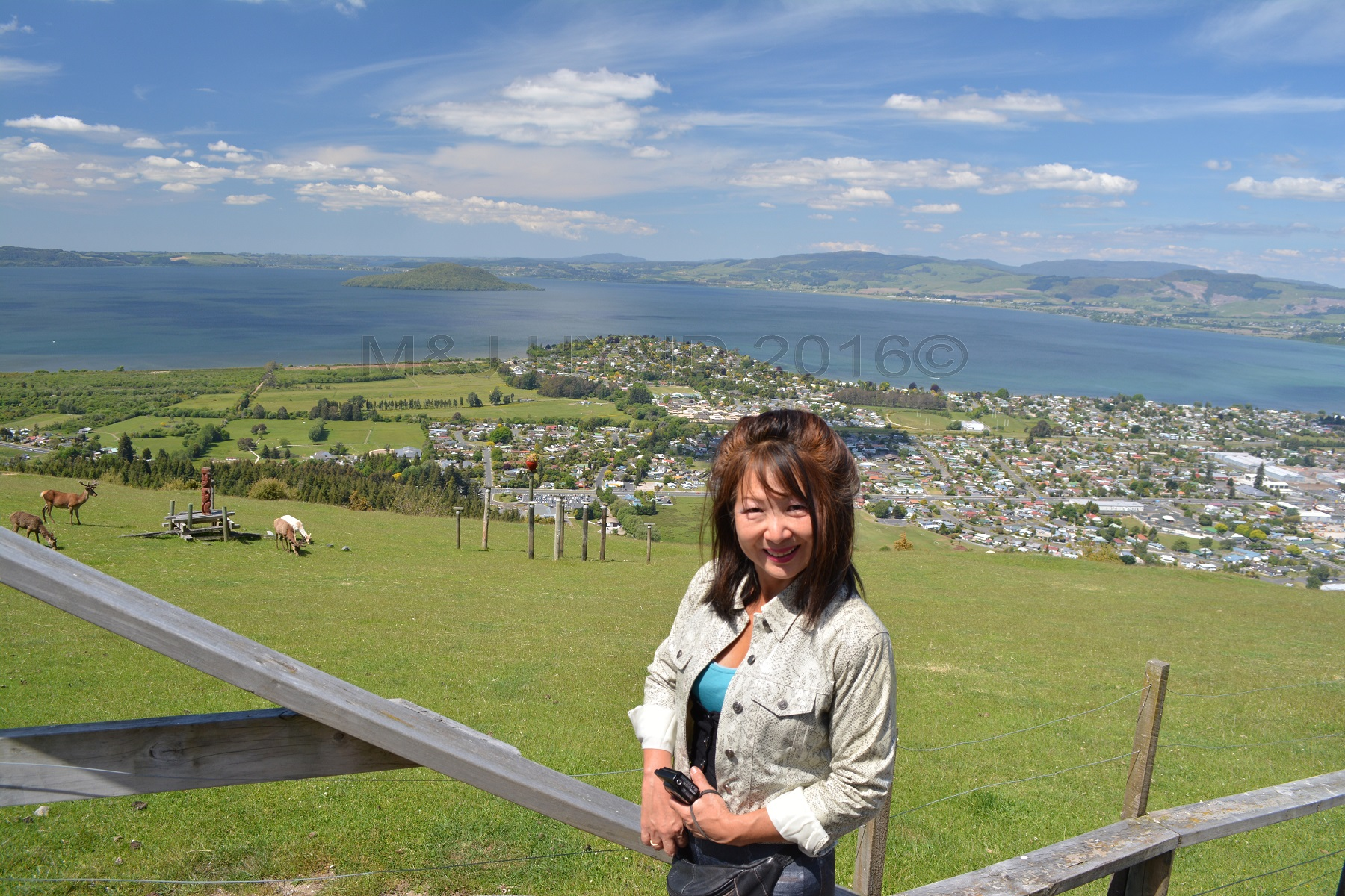 Ngongataha Hill, deer, Rotorua in the background, NZ