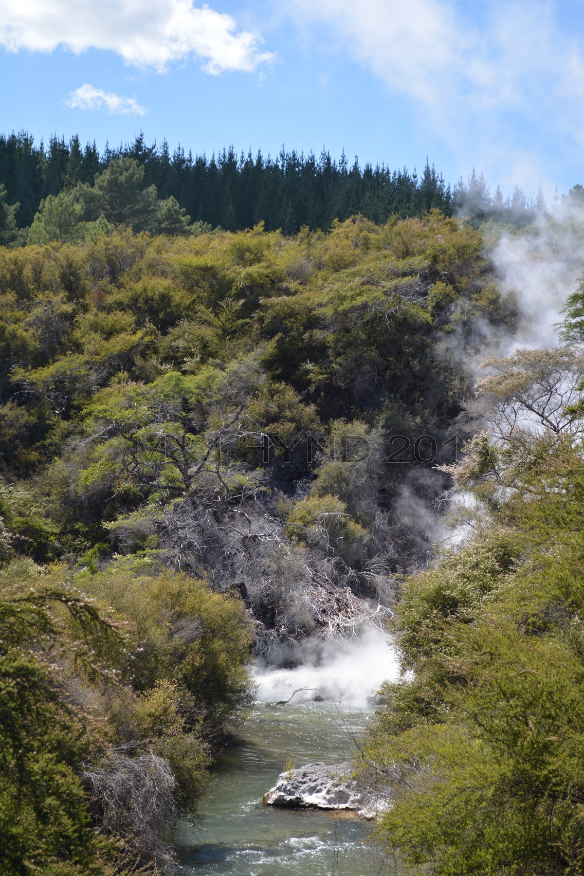 Bush walk stream+steam, Wai-o-tapu Thermal Wonderland, Rotorua, NZ
